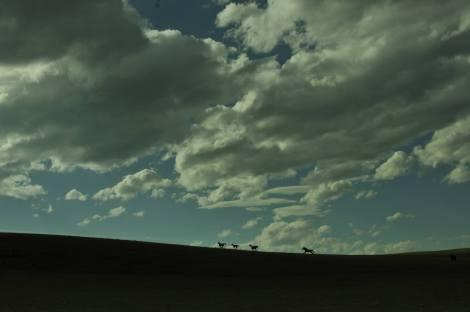 Vildhästar running
