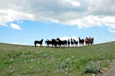 hästar3